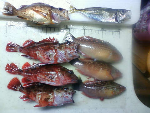 和歌山北港海つり公園の釣果